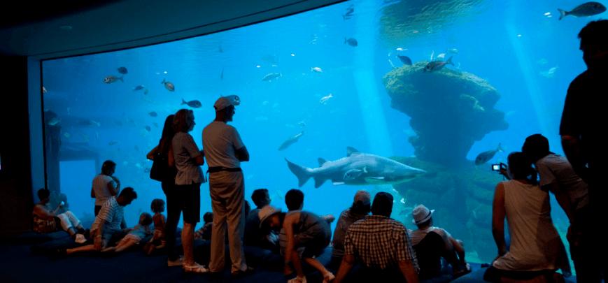 Palma Aquarium auf Mallorca