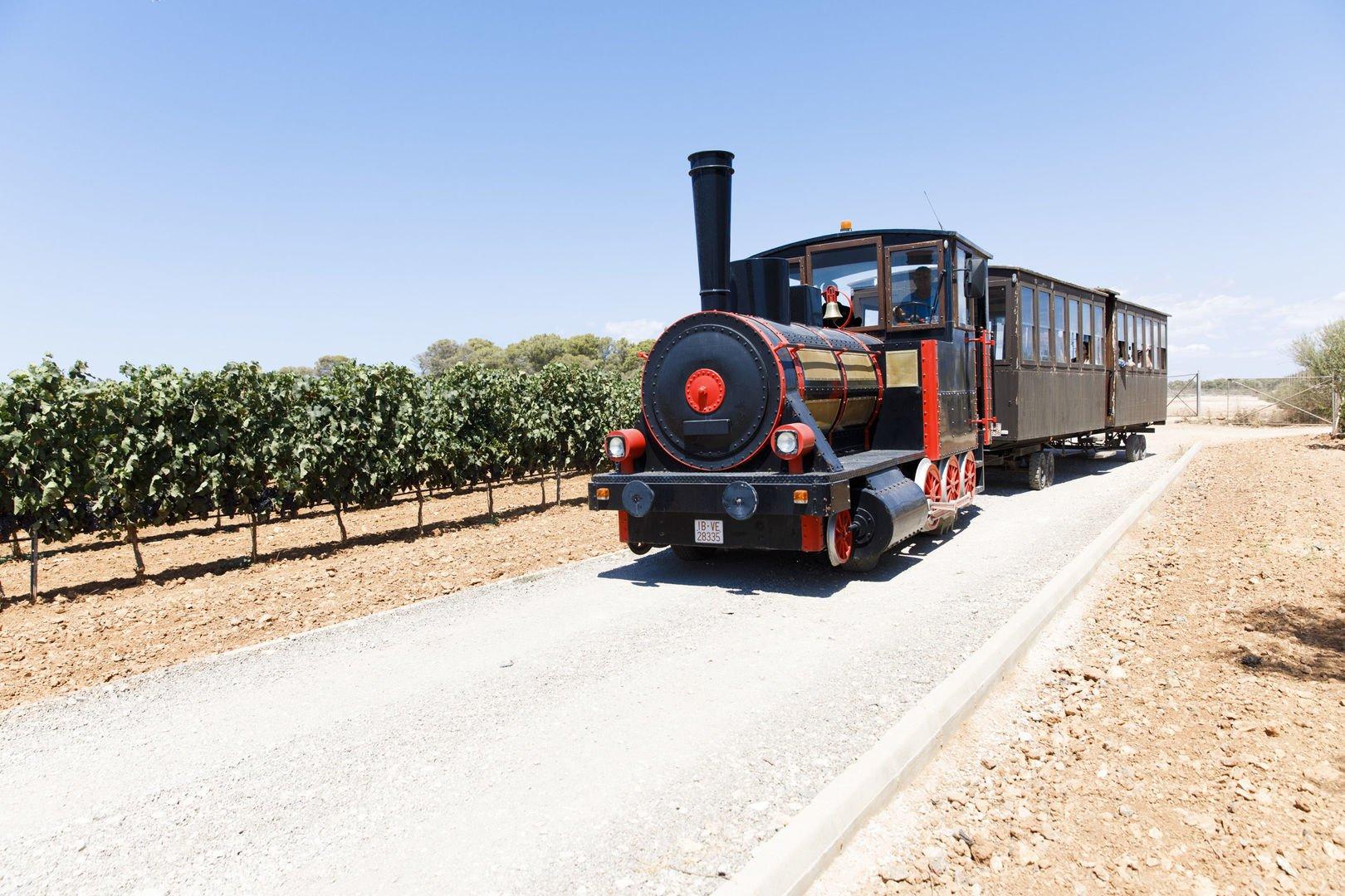 Zugfahrt auf Weinberg auf Mallorca