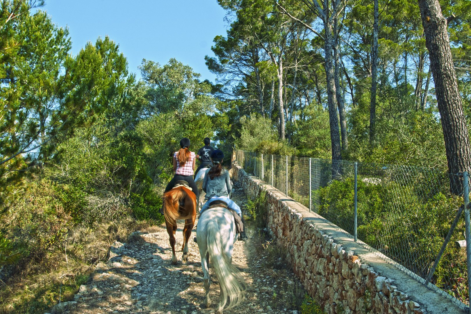 Ruta a caballo por el pinar