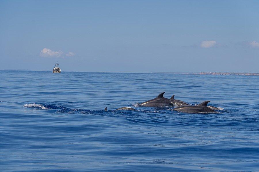 dolphin watching cala dor