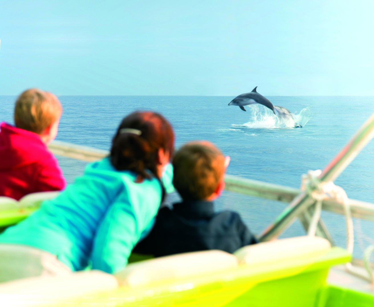 dolphins alcudia