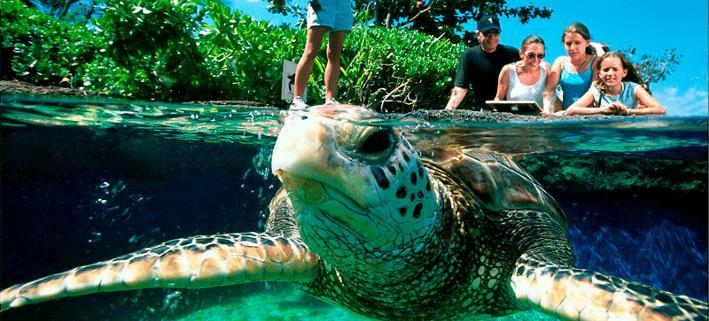 trip to palma aquarium