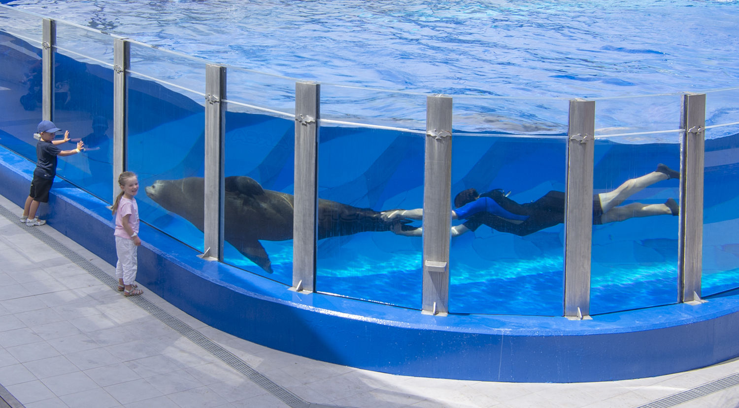 dolphins in marineland