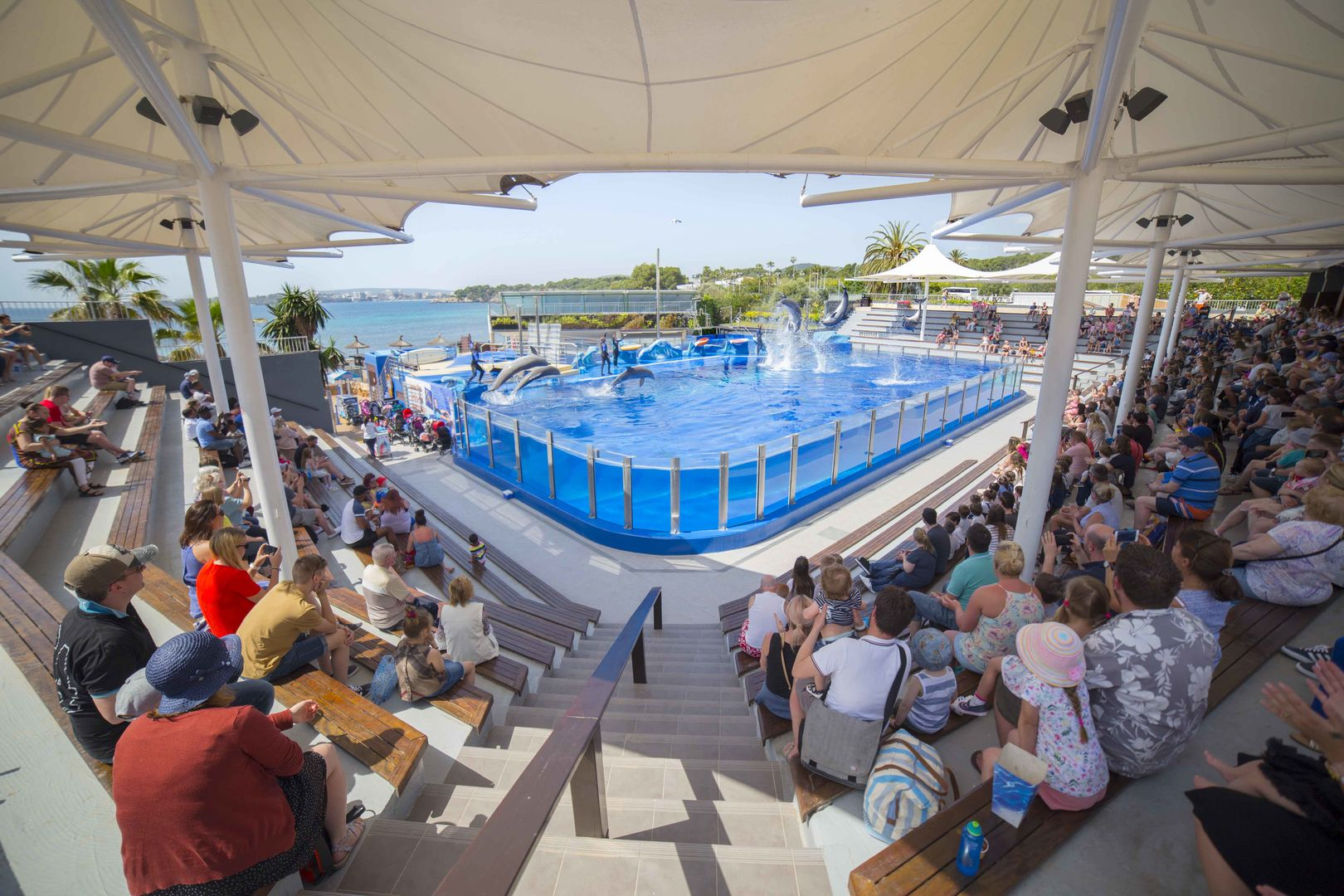 arena of dolphin show